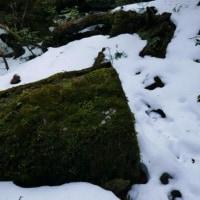 2月18日ヤクスギランドの景色【屋久島登山情報】
