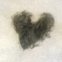 ヘアードネーション 髪の毛を寄付しました
