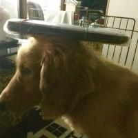 我が家のお犬様ルイ です