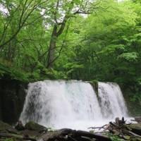 青森県・奥入瀬渓流の新緑