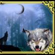 オオカミの変貌、変身・・・ジャッカル・・・アヌビス・・・