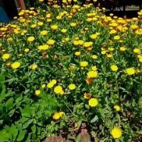 この時期の花たち