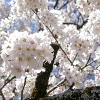 駒ヶ根の春⑦