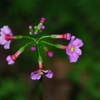 森のお花達…