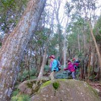 14 長者山山系(510m:安芸区・安佐北区)登山  面白い登山路でした