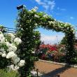 百花繚乱の横浜山下公園に大感激。