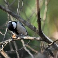 公園の野鳥達