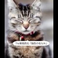 みんなの猫の写真から陽介監督がビデオを作ったYO!今日の出来心2016年10月13日(木)