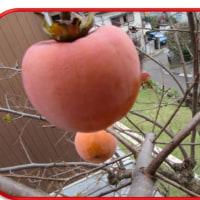 柿とみかん