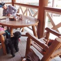 和束町の美味しい食べるお茶