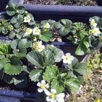 3月後半の庭