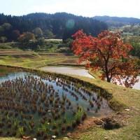 新潟県・上越市の「平方の棚田」