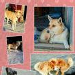 卒業犬チャーミーのフォトアルバム<15>