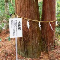 ~~~  なごりのもみじ (美濃市大矢田神社)~~~