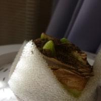 アマリリスの芽🍃