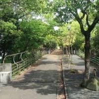 新緑の小松緑道を歩く