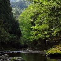渓流・新緑の久多川