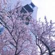 2017年5月ハロー通信【春のおでかけ】staff中原