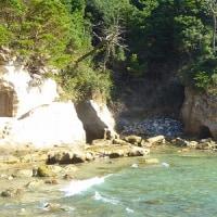 髙萩海岸にハマギクとコハマギクを訪ねる