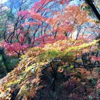 紅葉の道を歩く 新神戸駅から再度公園~大師道
