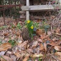 * 裏山にも春がやって来た *