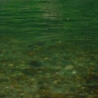 午後からは赤池で鮎釣り