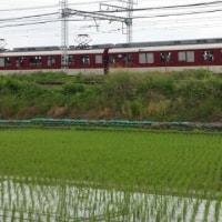 田んぼ監視員報告 5/24
