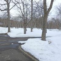 雪だるまつくろう~♪ Snowman