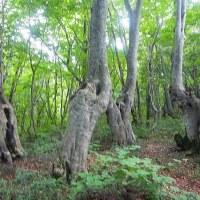 樹木が主役の写真ー12