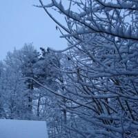 春の大雪に?
