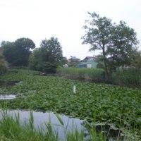 見沼代用水路の旧流路跡がいまに残る? ―田島橋と藤間橋―