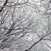 雪の芸術 (撮影旅行⑧)
