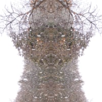 「雪が降る」の写真