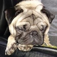 愛犬 マサル