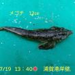 笑転爺の釣行記 7月19日☀ 長瀬・浦賀