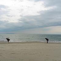 徳島の旅(その二)土砂降りのなか貝を拾う