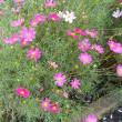 梅雨の草花