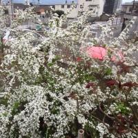 庭の花 170325