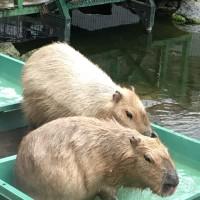 お風呂ファイナル〜近づく母さん