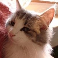 ノルウェーの森猫カフェへpart2^ - ^