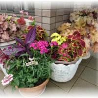 玄関前に寄せ植え追加&花苗購入
