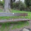 シアトル:Kurt Cobain's Bench