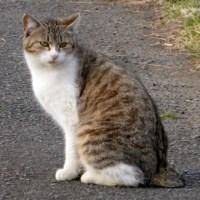 猫の品格…多摩川猫シリーズ