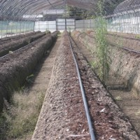 イチゴ栽培見学