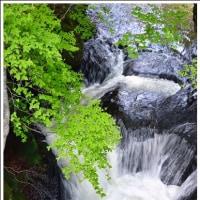 竜頭の滝(下部) (栃木県奥日光)  (1の1)  ★ 2017.06.25 ★