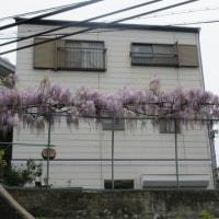 花いっぱいの神戸の風景 on 2017-4-21~4-23