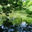 真夏の日差しになった善福寺公園です その5