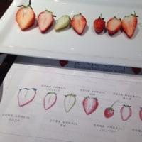スゴベジ「苺・スゴベリー」