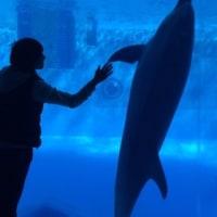 再会 名古屋港水族館