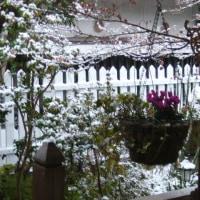 南国鹿児島も雪景色